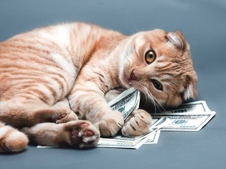 expensive-cat